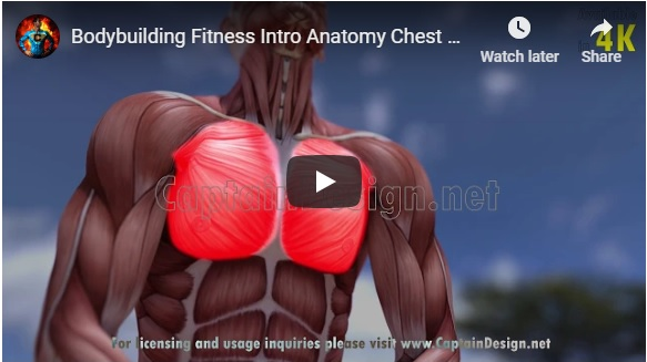 Bodybuilding Fitness Intro Anatomy Chest Muscles Pectorals 4KUHD